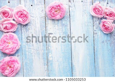 pink roses on a blue wooden background.space for text.Flat lay. Minimal Style #1105033253