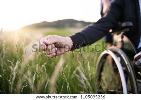 A hand of a senior man in wheelchair holding grass flower in nature. Close up. Royalty-Free Stock Photo #1105095236