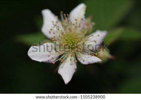 white flower macro photo petals nature #1105238900