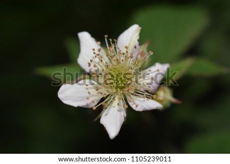 white flower macro photo petals nature #1105239011