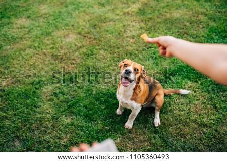 Feeding happy dog with treats. Royalty-Free Stock Photo #1105360493