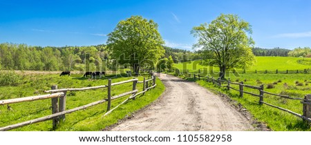 Countryside landscape, farm field and grass with grazing cows on pasture in rural scenery with country road, panoramic view #1105582958