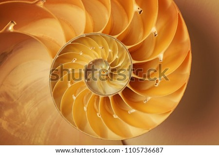 Inside of Nautilus Shell Showing Spiral #1105736687