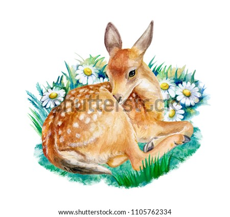 Fawn, deer sitting with camomile flowers isolated on a white background. Watercolor. Illustration. Template. Hand drawing. Close-up. Clip art.