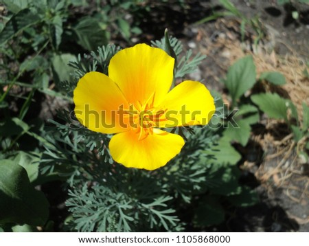 flowering plant flower with yellow petals #1105868000
