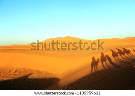 Camal caravan on a Nomad trip through sand desert #1105959611