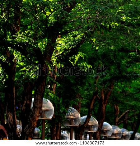 Tree lined sidewalk lights #1106307173