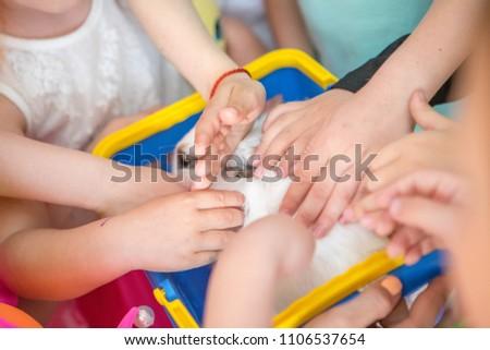 Children iron a lovely white rabbit, children's hands #1106537654