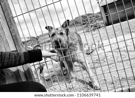 Abandoned dogs in the kennel, animals #1106639741