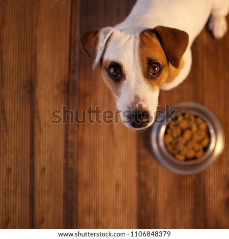 Pet eating foot. Dog eats food from bowl #1106848379