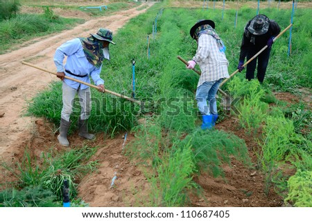 Worker are plowing oil and planting in agriculture field. #110687405