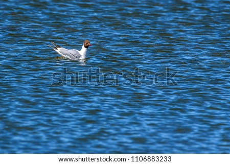 a lonely gull floating on the water #1106883233