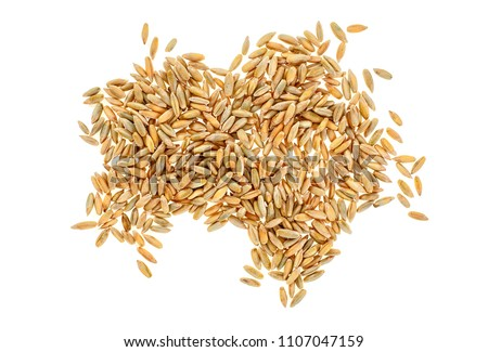 Closeup of rye grain isolated on white background #1107047159