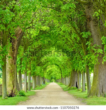 Tunnel-like Avenue of Linden Trees, Tree Lined Footpath through Park in Spring Royalty-Free Stock Photo #1107050276