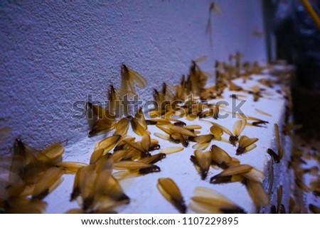Flying termite swarmer