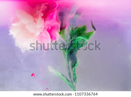 Beautiful isolated flower in water with colorful plumes engulfing and augmenting its shape and structure. a fine rendition.   #1107336764