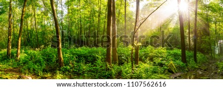 Sunrise in a green forest with brook #1107562616