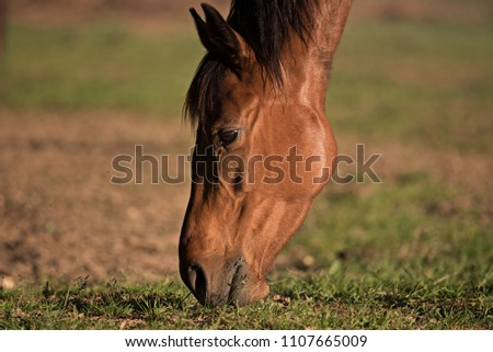 Head of a horse #1107665009