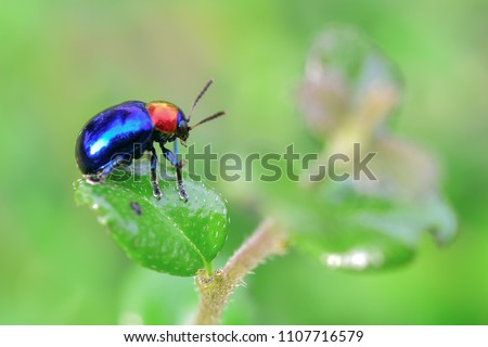 A small blue insect is caught on a green leaf. Royalty-Free Stock Photo #1107716579