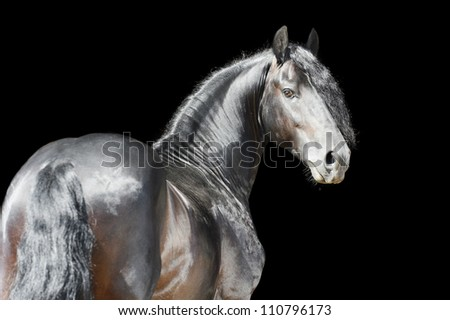 Black horse isolated on the black background #110796173