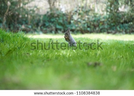 Squirrel on a lawn #1108384838