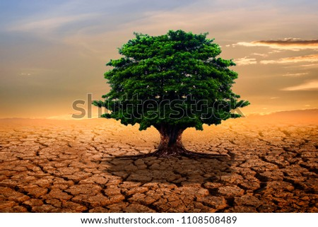The green tree in the middle of the ground, cracked by the drought in the summer, is beautifully sun-drenched. #1108508489