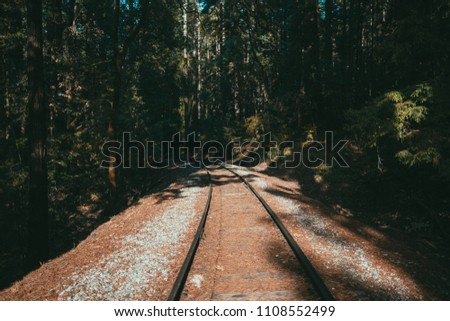 Brightly lit train tracks lead into the dark woods. #1108552499