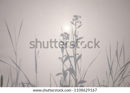 Shadows of flowers and grass on white semi-transparend fabric texture