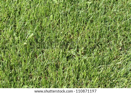 Close-up image of fresh spring green grass #110871197
