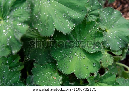 Water drops on leave Sweden may 2018 #1108782191
