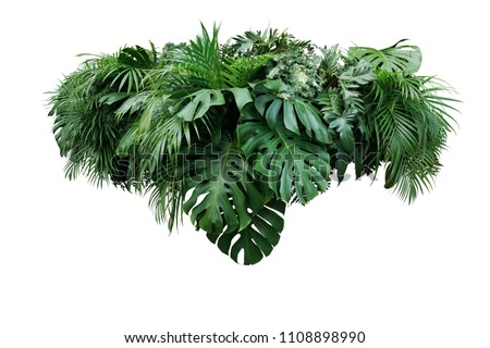Tropical leaves foliage plant jungle bush floral arrangement nature backdrop isolated on white background, clipping path included. #1108898990