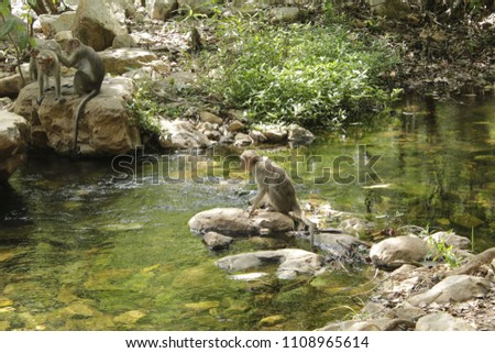 Cute Monkey Waiting to Drink #1108965614