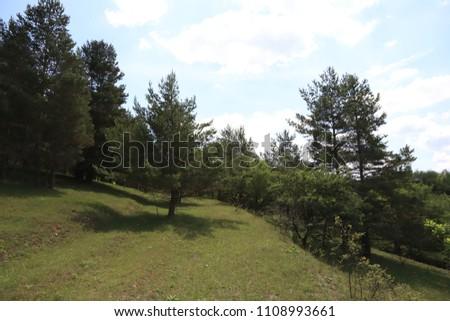 landscape outdoor spring trees #1108993661