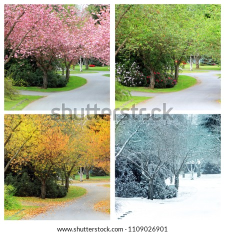Four seasons photographed from the exact same location on a cherry tree lined street in Canada. Spring, Summer, Autumn and winter.  #1109026901