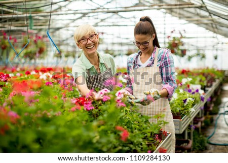 Portrait of senior and young women working together in flower garden at sunny day #1109284130