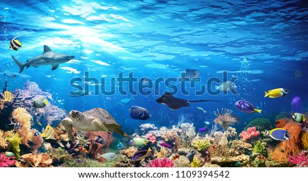 Underwater Scene With Coral Reef And Exotic Fishes  #1109394542