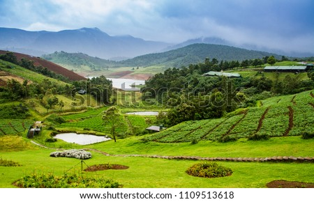 Vistas of green forests, mountain ranges covered in fog, blue skies and plantation, pond and lake at a resort in ooty #1109513618