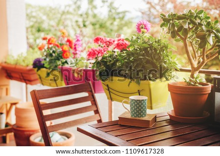 Cozy summer balcony with many potted plants, cup of tea and old vintage book Royalty-Free Stock Photo #1109617328