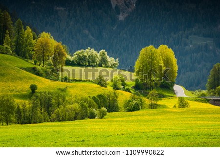Vibrant green summer trees and flowering meadow in Switzerland Alps. #1109990822