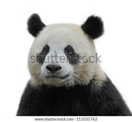 Panda bear #111035762