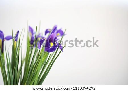 Purple irises on a white background #1110394292