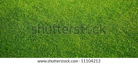 fresh lawn grass on golf course, *good for web use #11104213