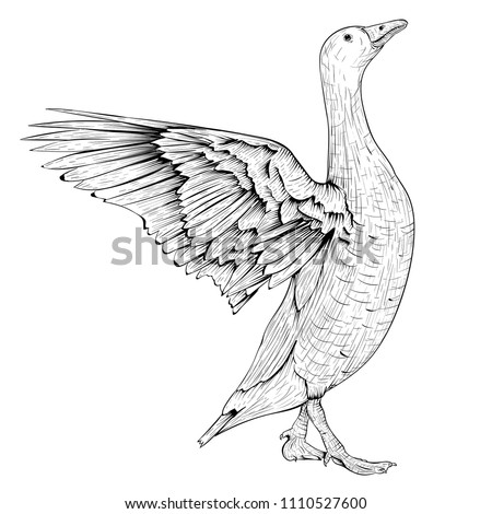 Goose sketch. Angry bird with lifted wings. Vector illustration isolated on white background