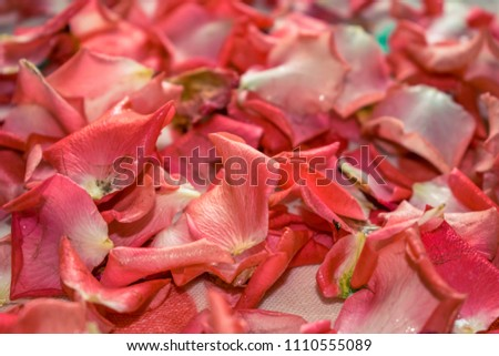 A photo of a rose petal. Decor of roses, background of rose petals. #1110555089