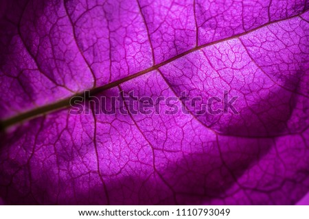 Isolated close up of a purple flower #1110793049