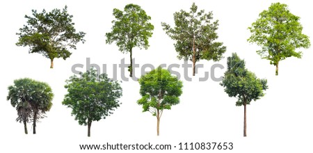 Tree isolated on a white background, Can be used a tree for part assembly to your designs or images. #1110837653