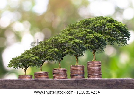 Plant growing  on Money coin stack . Saving money concept. finance sustainable development . economic growth.  Royalty-Free Stock Photo #1110854234