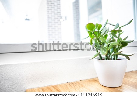 Predominantly white picture of succulent on a table next to window #1111216916