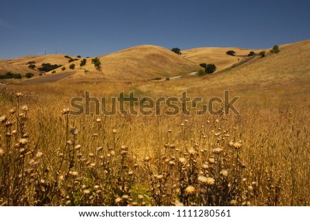 Dry Grass on California Hills Royalty-Free Stock Photo #1111280561