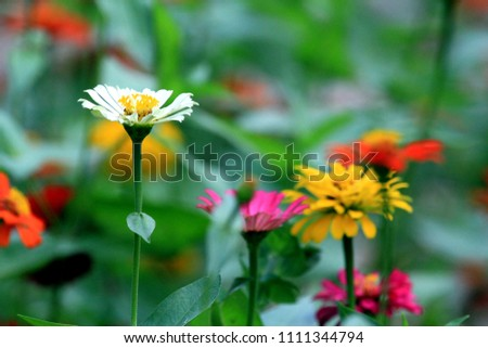 flowers for winter #1111344794